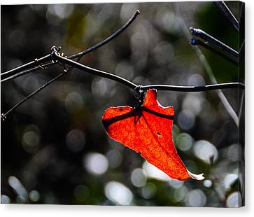 Spot Of Red Canvas Print by Don L Williams