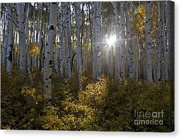 Spot Of Sun Canvas Print by Jeff Kolker