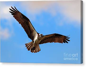 Spread Your Wings Canvas Print by Mike  Dawson