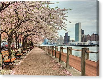 Spring Along The East River Canvas Print by JC Findley