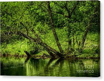 Spring Along West Fork River Canvas Print by Thomas R Fletcher