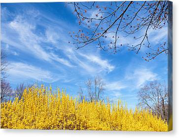 Spring Canvas Print by Bill Wakeley