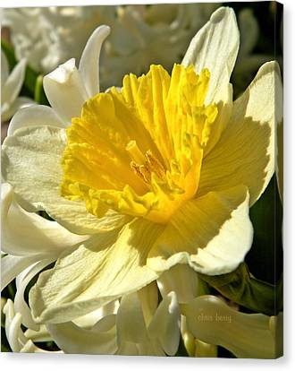 Spring Bloomers Canvas Print by Chris Berry