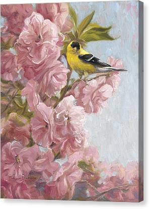 Spring Blossoms Canvas Print by Lucie Bilodeau