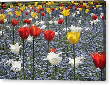Spring  Colour Canvas Print by Paul Felix