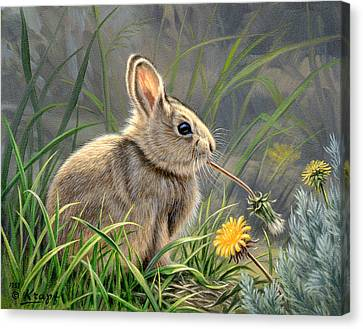 Spring Cottontail Canvas Print by Paul Krapf