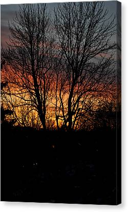 Spring Dawn Canvas Print by Frederico Borges