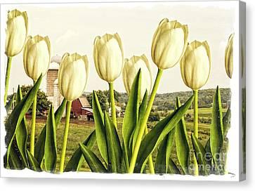 Spring Down On The Farm Canvas Print by Edward Fielding