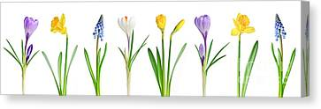 Spring Flowers  Canvas Print by Elena Elisseeva