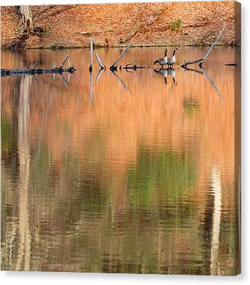 Spring Geese Square Canvas Print by Bill Wakeley