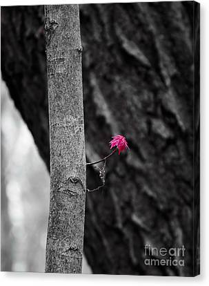 Spring Growth Canvas Print by Steven Ralser