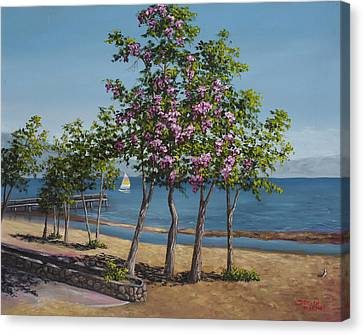 Spring In Kings Beach Lake Tahoe Canvas Print by Darice Machel McGuire