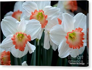 Spring Jonquils Canvas Print by Kathleen Struckle