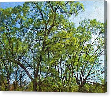 Spring Leaves In The Willows Canvas Print by Joy Nichols