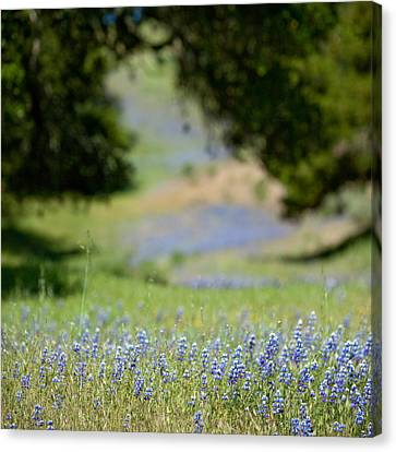 Spring Lupines Canvas Print by Art Block Collections