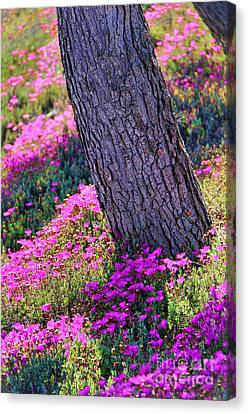 Spring Meadow Canvas Print by Mariola Bitner