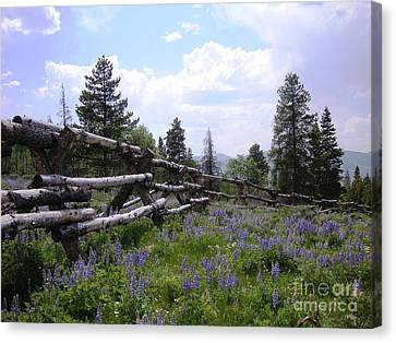 Spring Mountain Lupines 2 Canvas Print by Crystal Miller