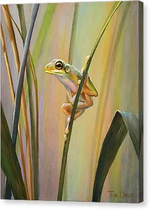Spring Peeper Canvas Print by Tim Davis