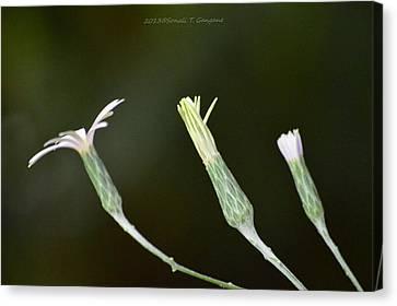 Spring Phase Canvas Print by Sonali Gangane