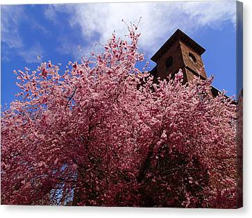 Spring Canvas Print by Robert Nickologianis