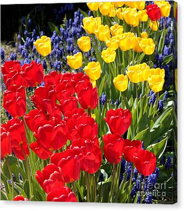 Spring Sunshine Canvas Print by Carol Groenen