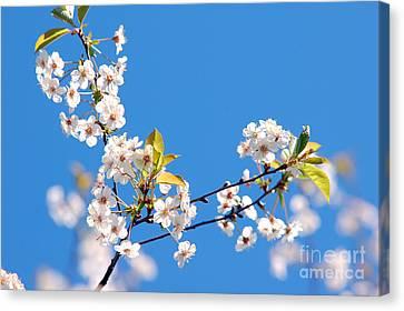 Spring Tree Canvas Print by Michal Bednarek