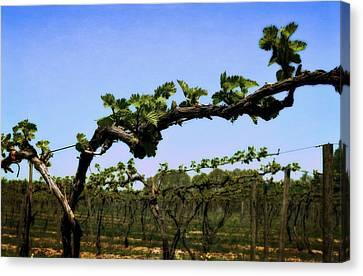 Spring Vineyard Canvas Print by Michelle Calkins