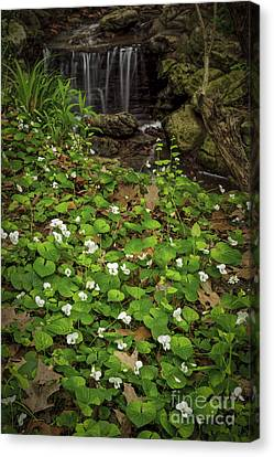 Spring Voilets Near Creek Canvas Print by Elena Elisseeva