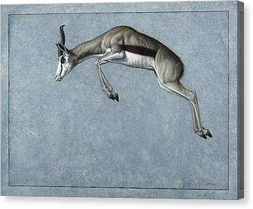 Springbok Canvas Print by James W Johnson
