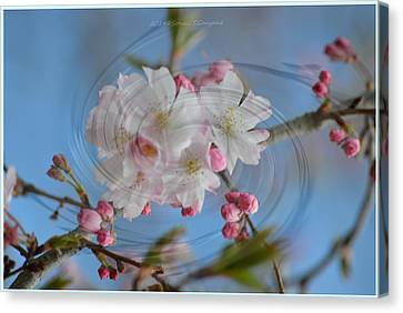 Springing Blossoms Canvas Print by Sonali Gangane