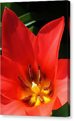 Springs Beginning Canvas Print by Bruce Bley