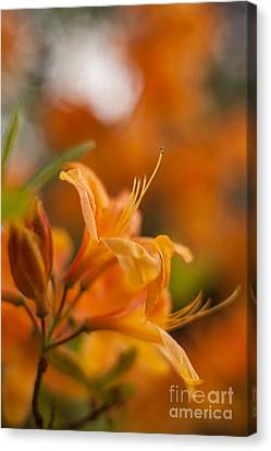 Springs Glory Canvas Print by Mike Reid