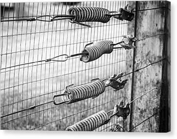 Springs On The Fence Canvas Print by Christi Kraft