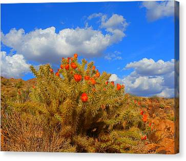 Springtime In Arizona Canvas Print by James Welch