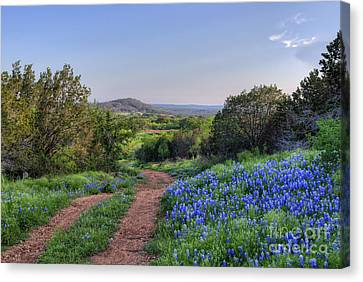 Springtime In The Hill Country Canvas Print by Cathy Alba