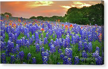 Springtime Sunset In Texas - Texas Bluebonnet Wildflowers Landscape Flowers Paintbrush Canvas Print by Jon Holiday