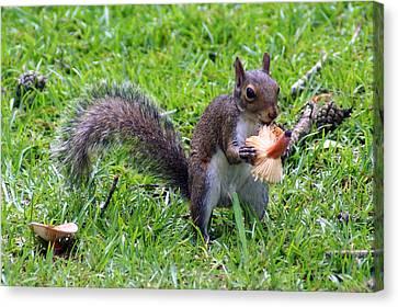Squirrel Eats Mushroom Canvas Print by Kim Pate