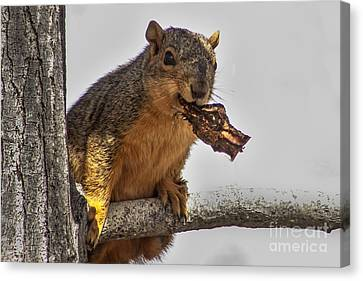 Squirrel Lunch Time Canvas Print by Robert Bales