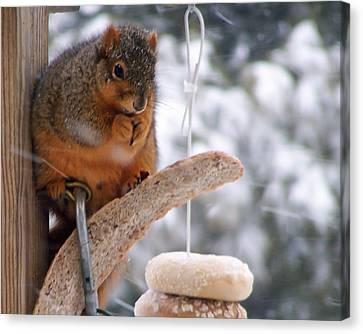 Squirrel Snack II Canvas Print by Jim Finch
