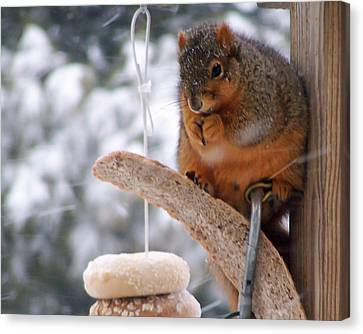 Squirrel Snack IIi Canvas Print by Jim Finch