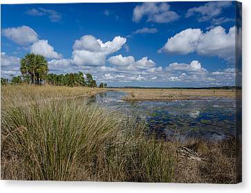 St. Marks Marsh Canvas Print by Don L Williams