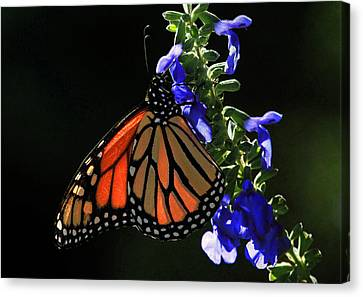 Stained Glass Wings Canvas Print by Donna Kennedy