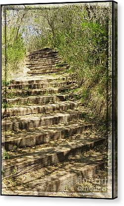 Stair Steps In The Forest Canvas Print by Ella Kaye Dickey