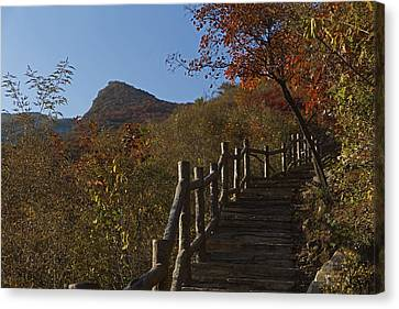 Stairway To The Top Canvas Print by Qing