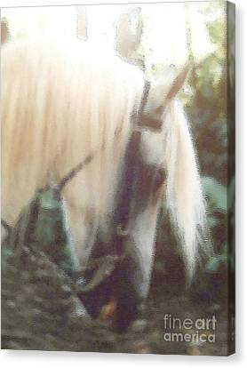 Stallion Canvas Print by Patricia Keller