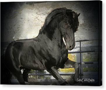 Stallion Power Canvas Print by Royal Grove Fine Art