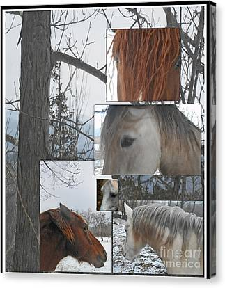 Stallions Collage There Is A Connection Canvas Print by Patricia Keller
