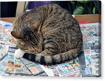 Cat Collecting Stamps Canvas Print by George Atsametakis