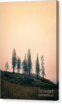 Stand Of Trees Along The Waihe'e Ridge Trail Canvas Print by Edward Fielding