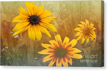 Standing Out Canvas Print by Beverly Guilliams